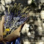 Bouquet de fleurs séchées : chardons lavande et épeautre by christian.man12 - Monieux 84390 Vaucluse Provence France