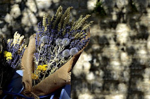 Bouquet de fleurs séchées : chardons lavande et épeautre par christian.man12