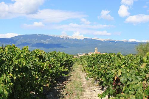 Mormoiron vue côté vigne by gab113