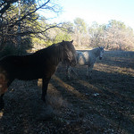Chevaux... by gab113 - Mormoiron 84570 Vaucluse Provence France