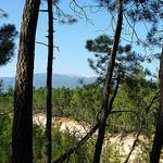 Mont-Ventoux à travers la pinède by gab113 - Mormoiron 84570 Vaucluse Provence France