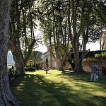 Château Pesquié et ses hauts platanes par gab113 - Mormoiron 84570 Vaucluse Provence France