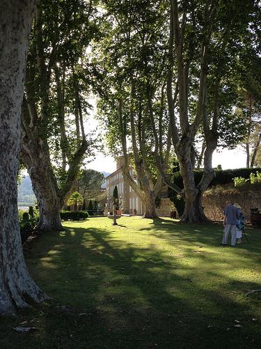 Château Pesquié et ses hauts platanes par gab113