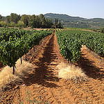 Vignes sur la terre rouge du vaucluse par gab113 - Mormoiron 84570 Vaucluse Provence France