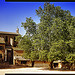 Arbre immense dans le Village d'Oppède by Patrick Bombaert - Oppède 84580 Vaucluse Provence France