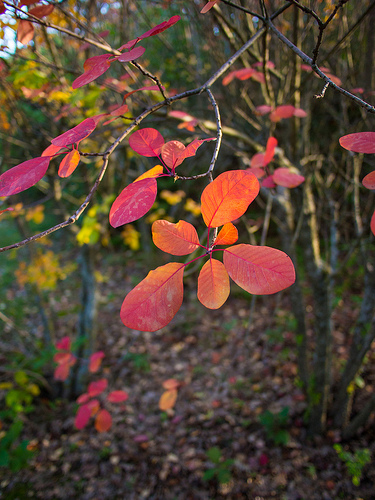 Automne flamboyant by Cpt_Love