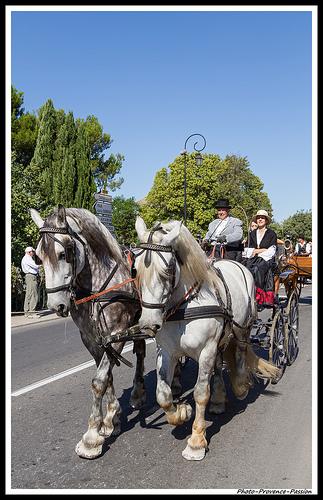 Chevaux de trait - Journées du Patrimoine à Pernes les Fontaines par Photo-Provence-Passion