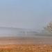 Brume à Robion par Charlottess - Robion 84440 Vaucluse Provence France