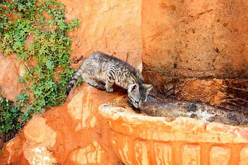 Chat à Roussillon par Aschaf