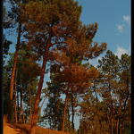 Pins colorés ocre à Roussillon par Patchok34 - Roussillon 84220 Vaucluse Provence France