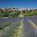 Village de Saignon camouflé dans la roche by Christopher Swan - Saignon 84400 Vaucluse Provence France