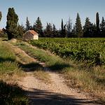 Vigne au pays de Sarrians by den:s - Sarrians 84260 Vaucluse Provence France