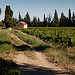 Vigne au pays de Sarrians by  - Sarrians 84260 Vaucluse Provence France