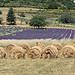 Rouleaux de foin et rangées de lavande by gab113 - Sault 84390 Vaucluse Provence France