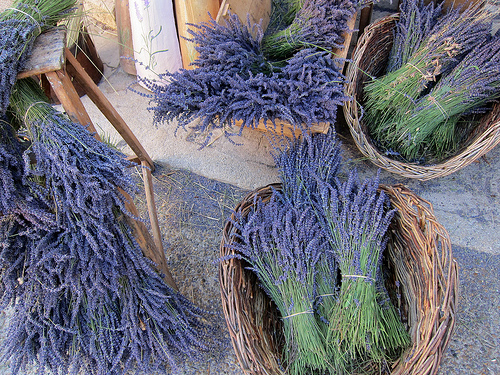 Sault : bouquet de lavande séchée par __Olivier__