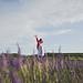 Bol de bonheur de lavande par Dri.Castro - Sault 84390 Vaucluse Provence France