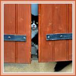 Chat caché mais attentif ! - Séguret par Charlottess - Séguret 84110 Vaucluse Provence France