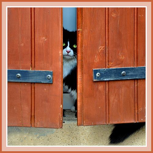 Chat caché mais attentif ! - Séguret par Charlottess