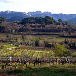 Vigne et les Dentelles de Montmirail par  - Sguret 84110 Vaucluse Provence France