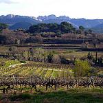 Vigne et les Dentelles de Montmirail par fgenoher - Séguret 84110 Vaucluse Provence France