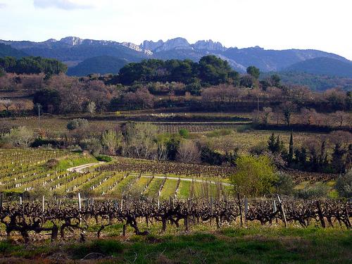 Vigne et les Dentelles de Montmirail par fgenoher