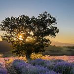 Magnifique lever de soleil près de Sault (Vaucluse - St. Christol) par Stéphan Wierzejewski