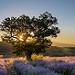 Magnifique lever de soleil près de Sault by Stéphan Wierzejewski - St. Christol 84390 Vaucluse Provence France