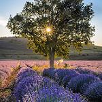 Lever du soleil sur les lavances - Saint-christol-d'albion par Stéphan Wierzejewski - St. Christol 84390 Vaucluse Provence France