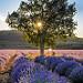 Lever du soleil sur les lavances - Saint-christol-d'albion par gab113 - St. Christol 84390 Vaucluse Provence France