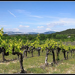 Vignes sur Fond de Dentelles de Montmirail par  - St. Didier 84210 Vaucluse Provence France