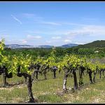 Vignes sur Fond de Dentelles de Montmirail par redwolf8448 - St. Didier 84210 Vaucluse Provence France