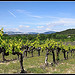 Vignes sur Fond de Dentelles de Montmirail by  - St. Didier 84210 Vaucluse Provence France