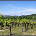Vignes sur Fond de Dentelles de Montmirail by redwolf8448 - St. Didier 84210 Vaucluse Provence France