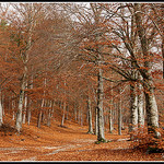 Chemin du Ventoux au Couleurs de l'automne par  - Roquesteron  Vaucluse Provence France