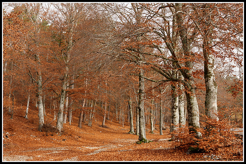 Chemin du Ventoux au Couleurs de l'automne by Photo-Provence-Passion