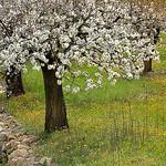 Le verger - Saint-Martin-de-Castillon by Charlottess - St. Martin de Castillon 84750 Vaucluse Provence France