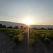 6h48 : le soleil se lève... par gab113 - St. Pierre de Vassols 84330 Vaucluse Provence France