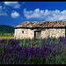 Maisonnette de pierres dans les lavandes par Patchok34 - St. Trinit 84390 Vaucluse Provence France