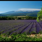 Le Mont-Ventoux vu de Saint-Trinit by  -   Vaucluse Provence France