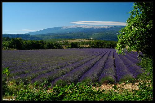 Le Mont-Ventoux vu de Saint-Trinit par Patchok34