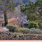 Mozaique d'arbres à Vaison-la-Romaine par Charlottess - Vaison la Romaine 84110 Vaucluse Provence France