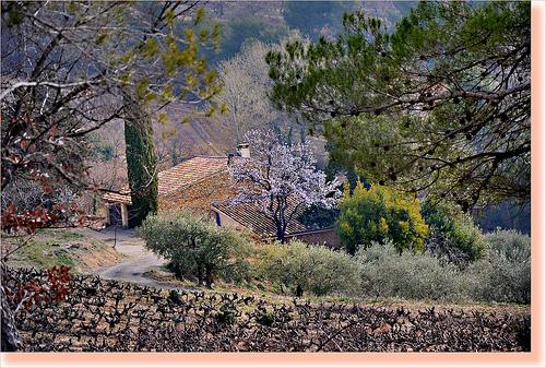 Mozaique d'arbres à Vaison-la-Romaine by Charlottess