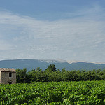 Vigne et Mont-Ventoux par gab113 - Villes sur Auzon 84570 Vaucluse Provence France