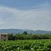 Vigne et Mont-Ventoux by gab113 - Villes sur Auzon 84570 Vaucluse Provence France