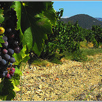 Vignes à Rasteau, l'exception d'un terroir... by Idealist'2010 - Rasteau 84110 Vaucluse Provence France