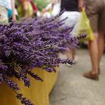 Bonnieux Market : lavender by patrickd80 - Bonnieux 84480 Vaucluse Provence France