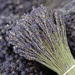 Bouquet de lavande séchée par Melissa Schneider - L'Isle sur la Sorgue 84800 Vaucluse Provence France