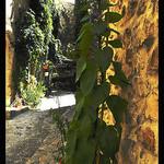 Mur végétal ou mariage naturel ? par Idealist'2010 - Vaison la Romaine 84110 Vaucluse Provence France