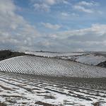 Champ de lavande en hiver par Le pot-ager -   provence Provence France