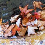 Tisane d'automne by Tinou61 - Auribeau 04380 Alpes-de-Haute-Provence Provence France